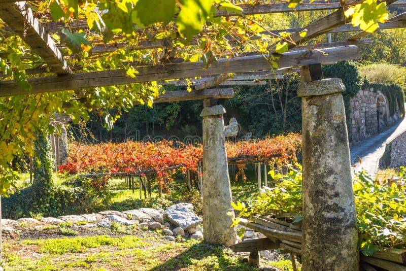 Jesień kolory w winnicy, Włochy zdjęcia stock