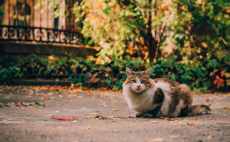 Jesień kota portret w mieście obraz stock