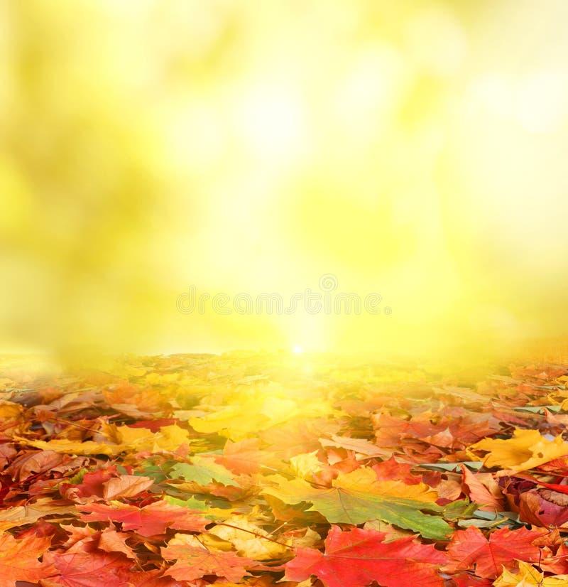 Jesień krajobraz. obrazy royalty free