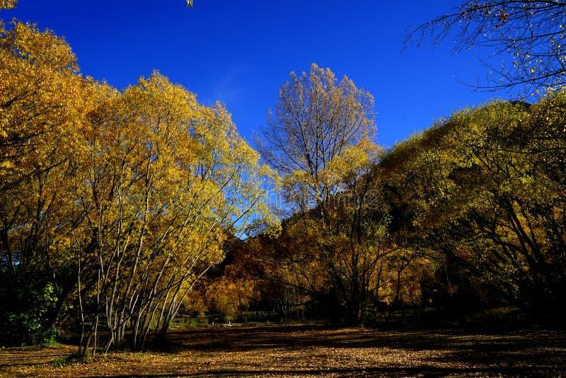 Jesień krajobraz Arrowtown obraz stock