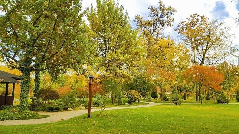 Jesień krajobraz, drzewa z kolorem żółtym i czerwień liście w parku, zdjęcia stock