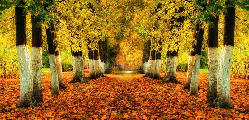 Jesień krajobraz - jaskrawi jesieni drzewa i pomarańcze spadać liście na ziemi Jesień kolorowa aleja zdjęcie royalty free
