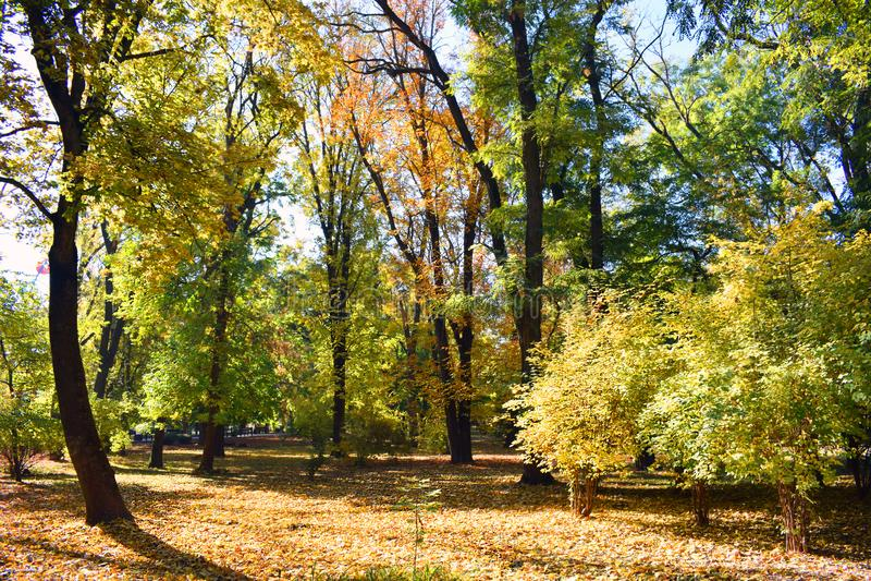 Jesień krajobraz Koloru żółtego, zieleni i pomarańcze liście, obraz stock