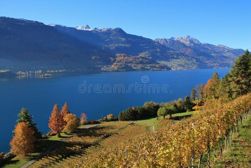 Jesień krajobraz przy jeziornym Walensee, Szwajcaria Winnica w Wal zdjęcie royalty free
