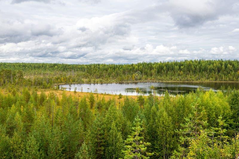 Jesień krajobraz sosnowy las w Russky Przecina parka narodowego, n obraz stock