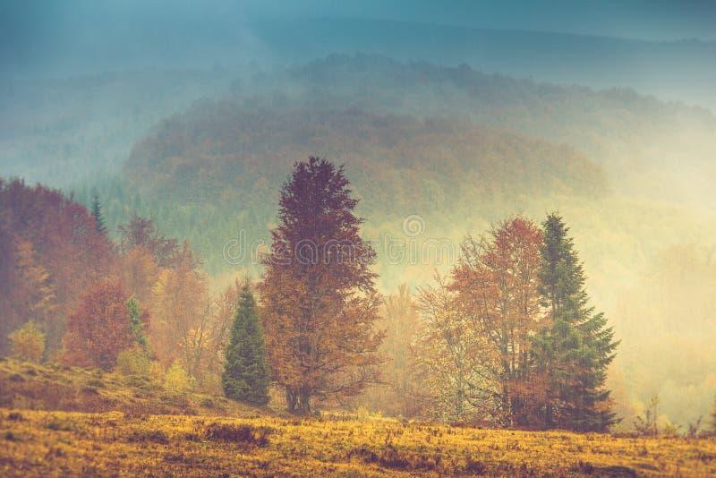 Jesień krajobraz w górze Kolorowi drzewa w mgle i deszczu zdjęcia stock