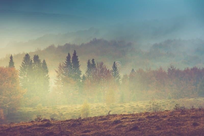 Jesień krajobraz w górze Kolorowi drzewa w mgle i deszczu obraz stock