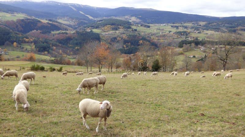 Jesień krajobraz w livradois forez, Auvergne France fotografia stock