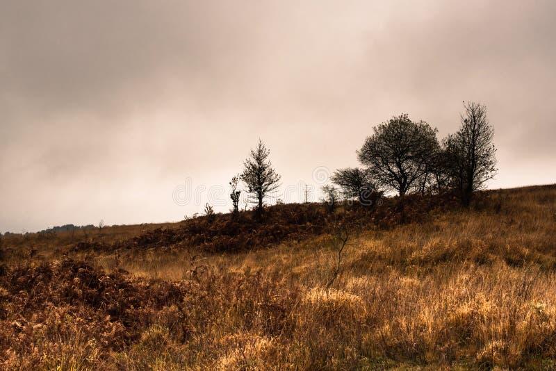 Jesień krajobraz w Nowym lesie obrazy royalty free