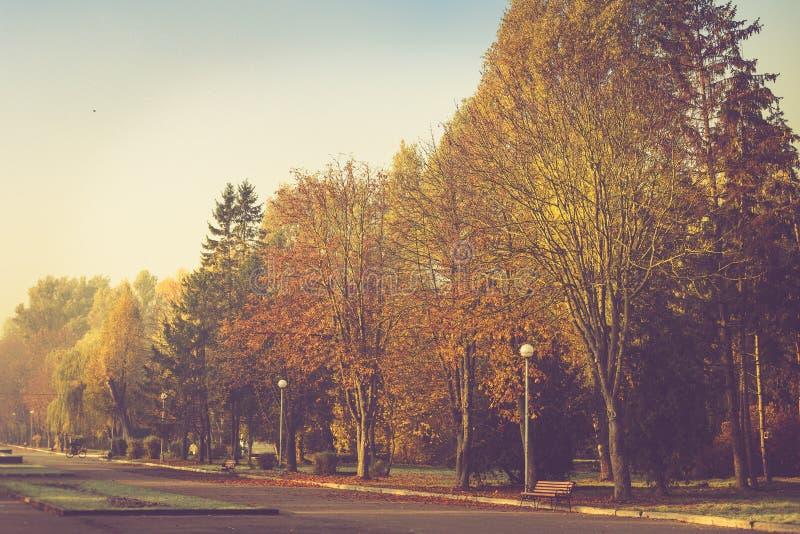 Jesień krajobraz w ranku parku Widok kolorowi drzewa na alei fotografia stock