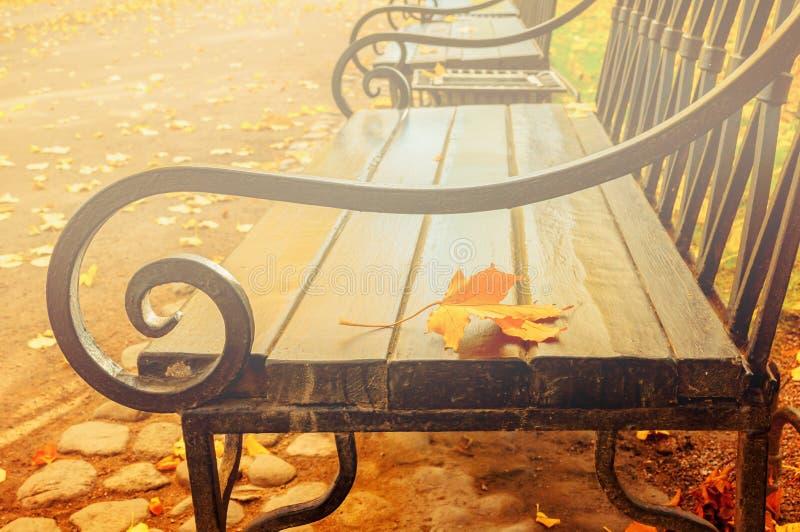 Jesień krajobraz - yellowed jesień liść na drewnianej osamotnionej ławce w jesień parku fotografia royalty free