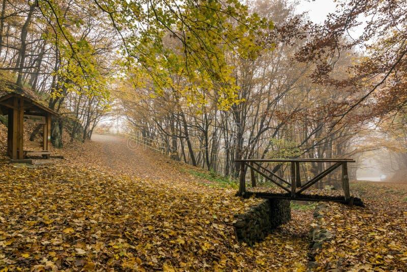 Jesień krajobraz z żółtymi drzewami, Vitosha góra, Bułgaria fotografia royalty free