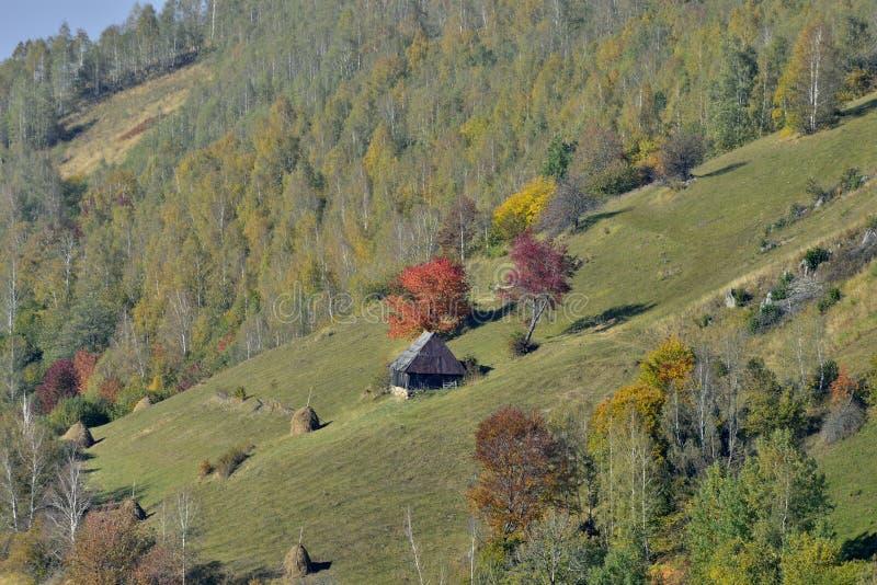Jesień krajobraz z dom na wsi i czerwieni drzewami obraz royalty free