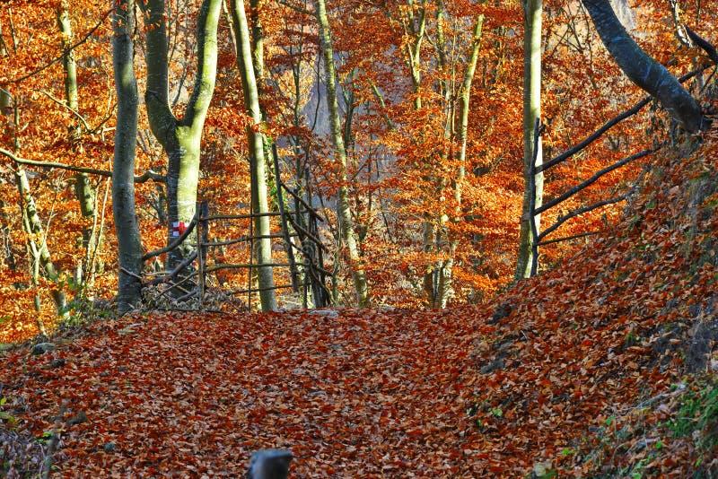 Jesień krajobraz z drewnianym ogrodzeniem i spadać liśćmi w lesie zdjęcia royalty free