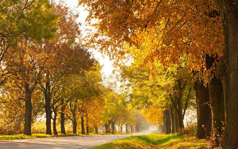 Jesień krajobraz z drogowymi i złocistymi drzewami along zdjęcie royalty free
