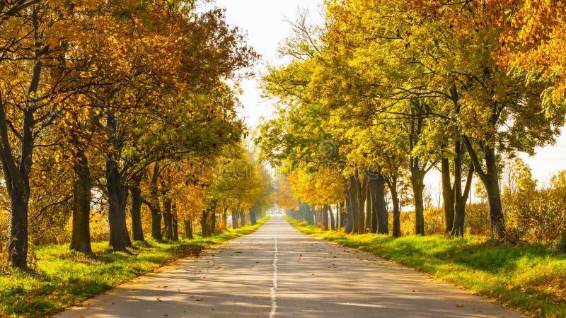 Jesień krajobraz z drogowymi i złocistymi drzewami along zdjęcia stock