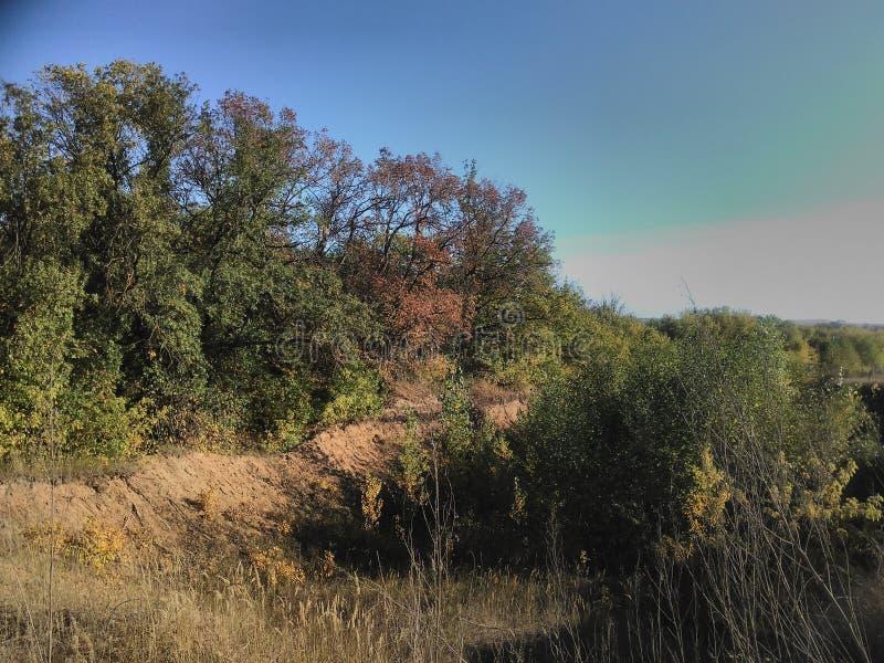Jesień krajobraz z drzewami zdjęcia stock