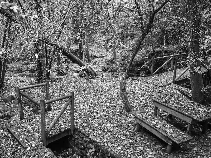 Jesień krajobraz z drzewami w czarny i biały obraz royalty free