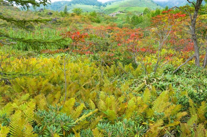 Jesień krajobraz z gór drzewami i roślinami zdjęcia stock
