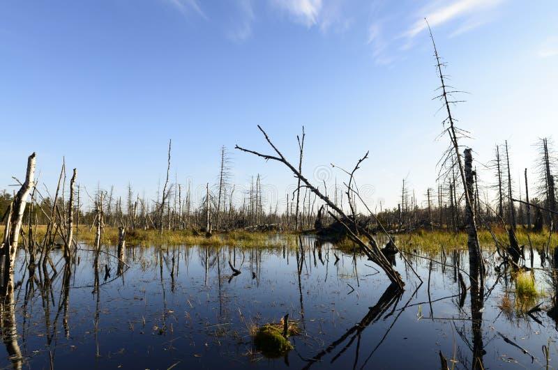 Jesień krajobrazu bagna w północnym Rosja obrazy stock