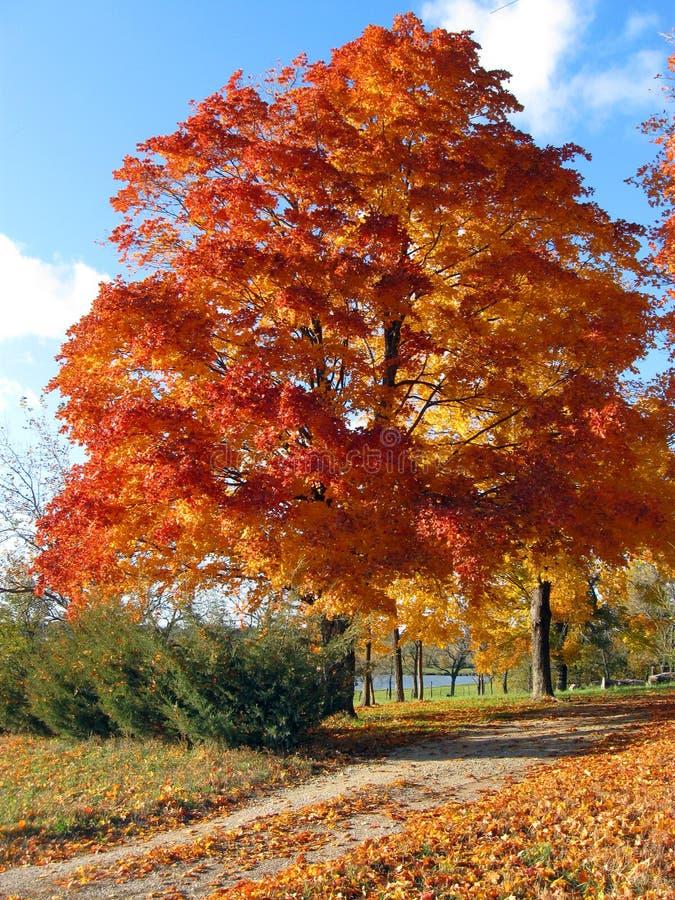 jesień kraju pasa ruchu drzewo obrazy royalty free