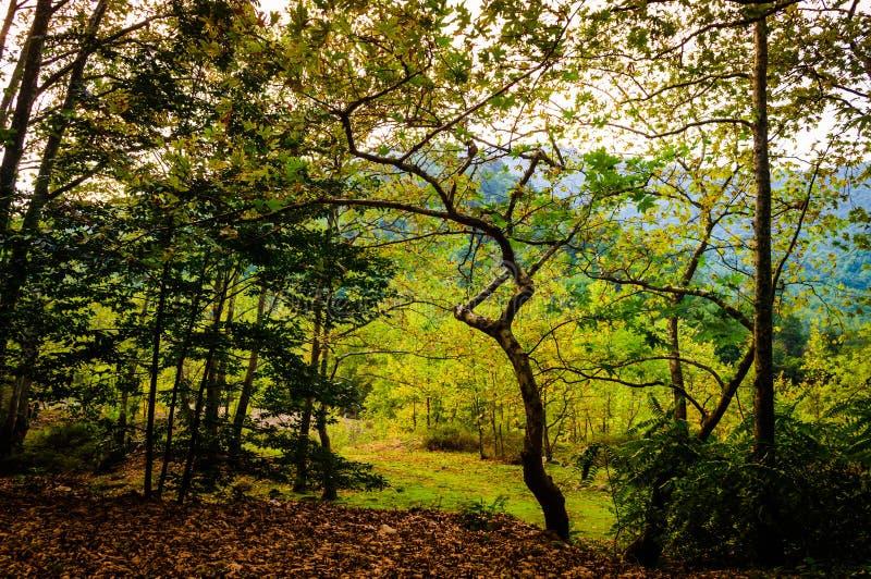 Jesień las Egejski region obraz royalty free