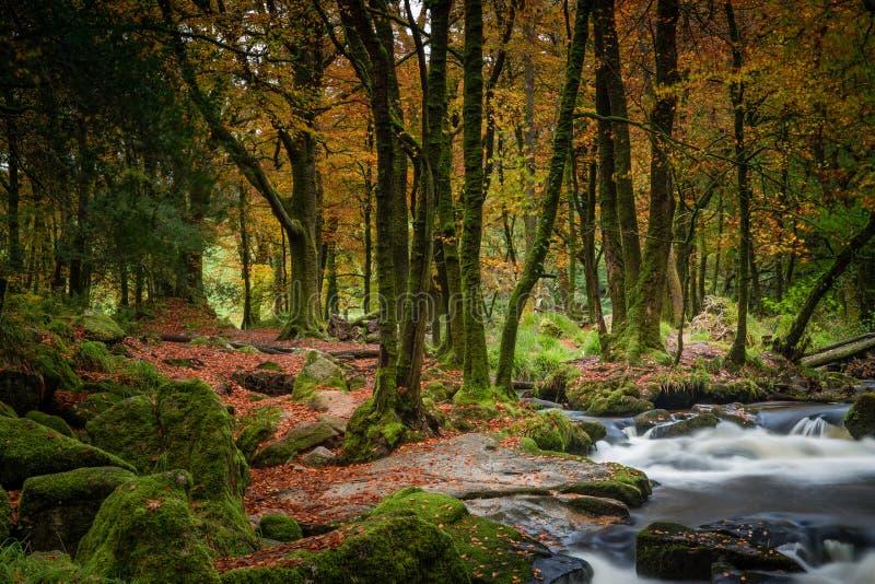 Jesień las, Golitha spadki, Cornwall zdjęcie royalty free
