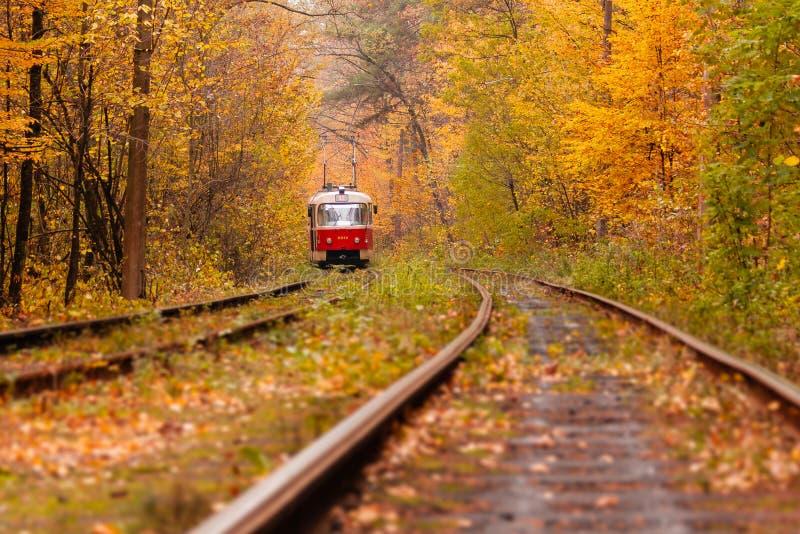 Jesień las wśród którego iść dziwaczny tramwaj obrazy royalty free