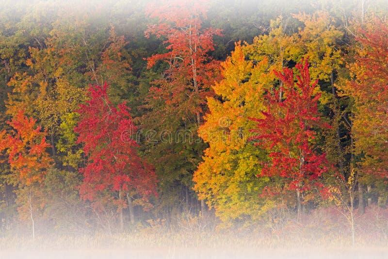 Jesień las w mgle obrazy royalty free