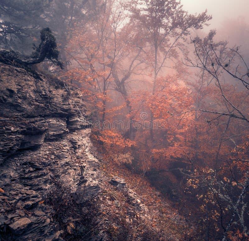 Jesień las w mgle piękna naturalnego krajobrazu ilustracyjny lelui czerwieni stylu rocznik fotografia royalty free