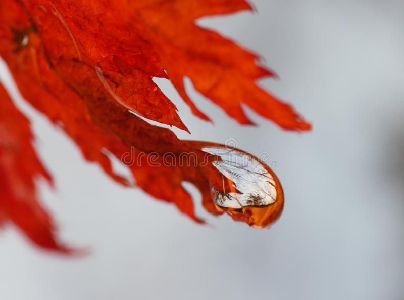 Jesień las w wody kropli zdjęcia stock