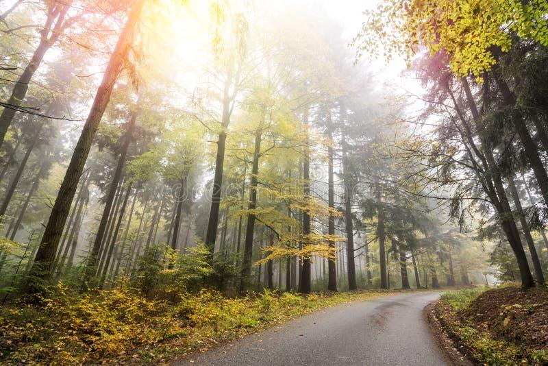 Jesień las z drogą obraz stock