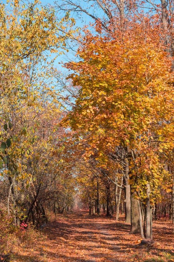 Jesień las z promieniami iluminuje złotego fo ciepły światło obraz stock
