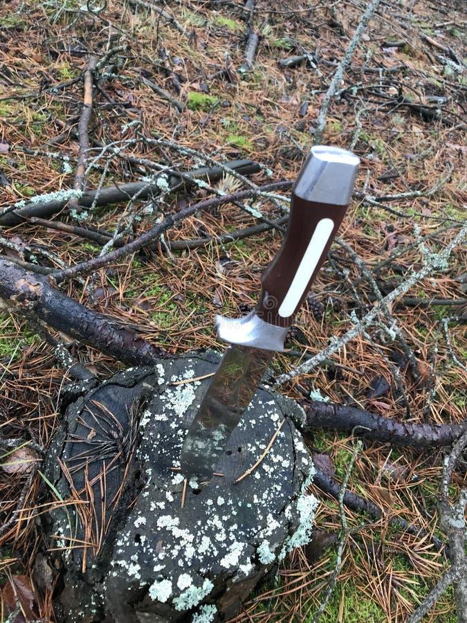 Jesień lasowy fiszorek przerastający z mech nóż wtyka w fiszorku fotografia stock