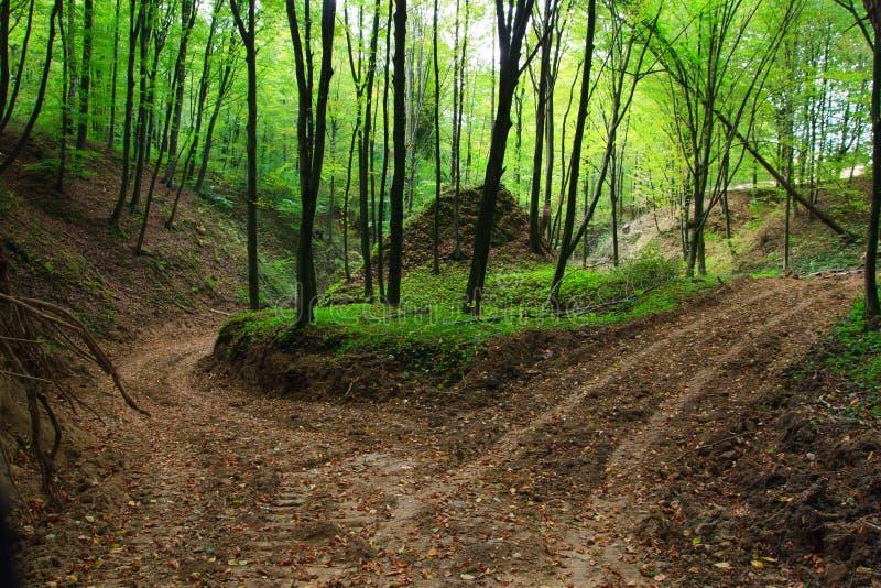jesień lasu błotnista wąwozu droga obrazy stock