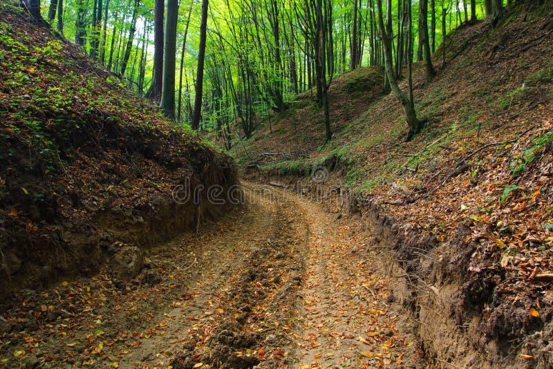 jesień lasu błotnista wąwozu droga zdjęcia royalty free