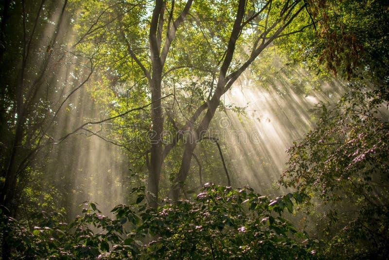 Jesień lasu drzewa Natury światła słonecznego zieleni drewniani tła zdjęcie royalty free