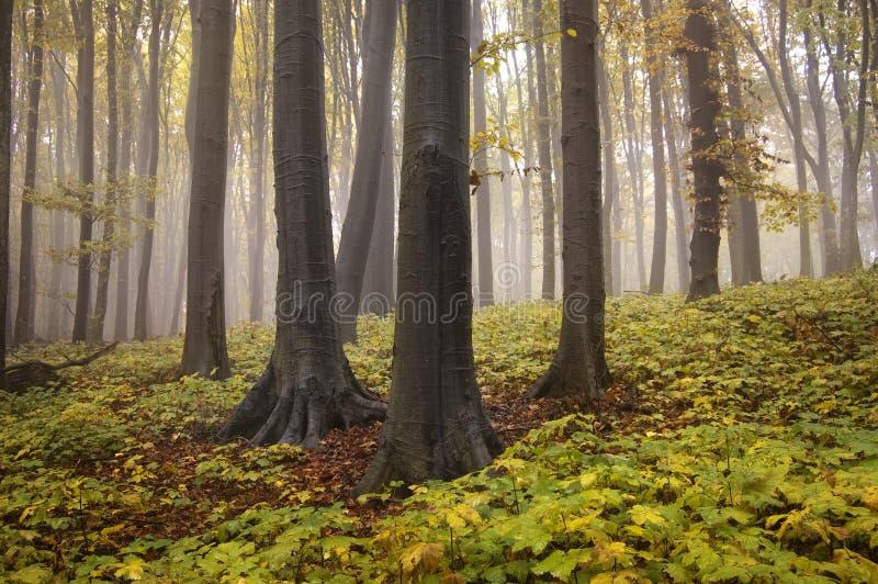jesień lasu krajobrazu liść kolor żółty zdjęcie stock