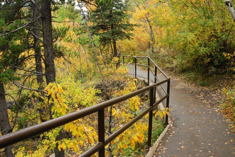 jesień lasu target3033_0_ ślad obraz stock