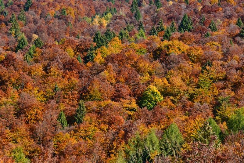 Jesień lasy dolomity w Włochy zdjęcia stock