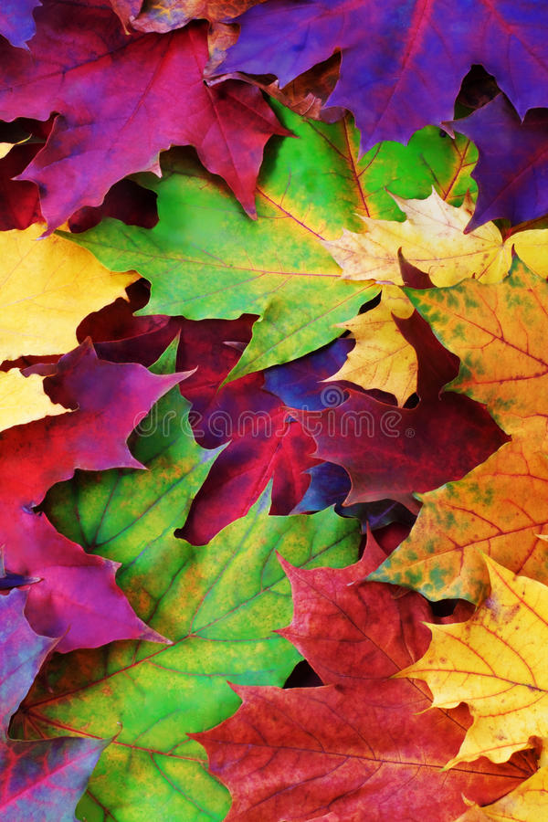 jesień liść zdjęcie stock