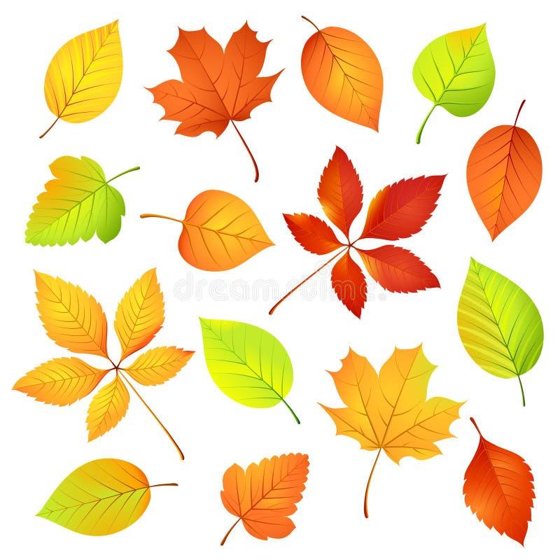 Jesień liść. ilustracja wektor