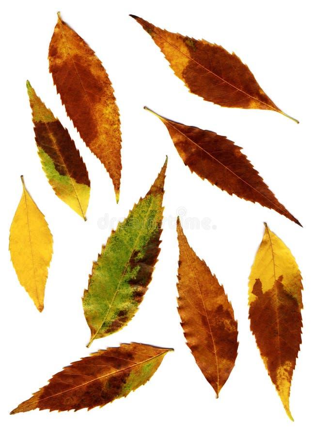 jesień liść obraz stock