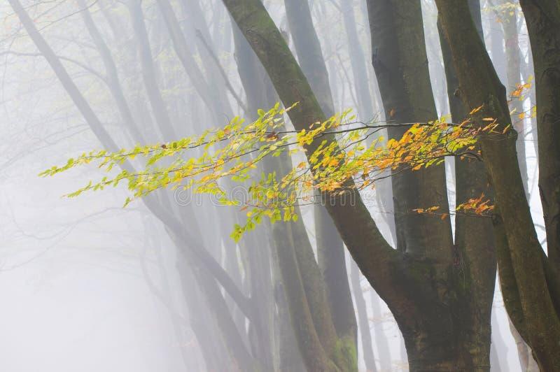 jesień liść drzewa fotografia royalty free