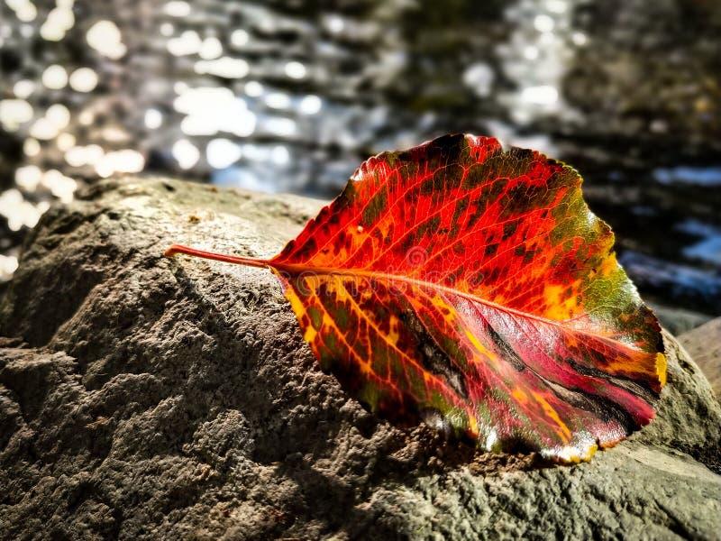 Jesień liść jeziorem zdjęcia royalty free