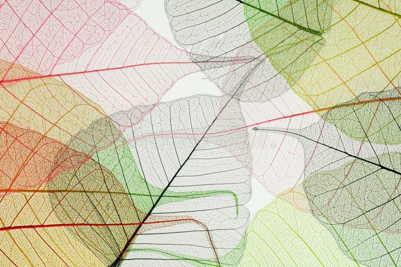 jesień liść koścowie zdjęcie stock