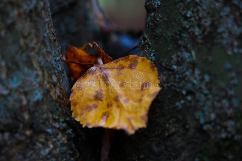 Jesień liść na drzewie fotografia stock