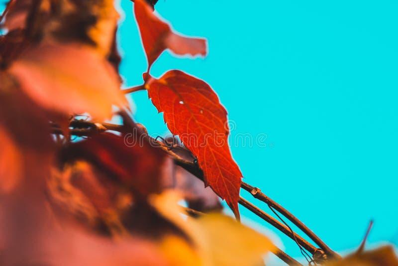 Jesień liść na gałąź na nieba tle fotografia royalty free