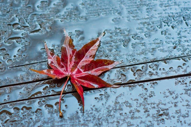 Jesień liść na mokrej drewnianej powierzchni fotografia royalty free