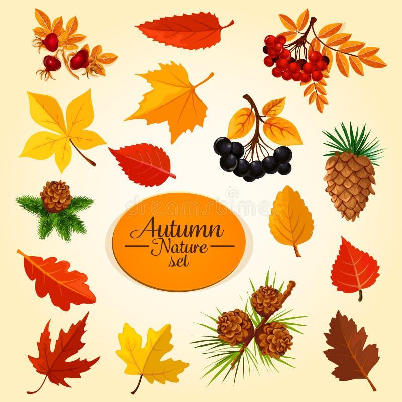 Jesień liść, owoc i jagoda, sezon jesienny ikony set ilustracji